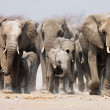 Elephant herd — Stock Photo #3973214