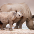 Black Rhinoceros baby and cow - Stock Photo