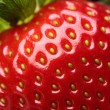 Fresh strawberry close-up — Stockfoto