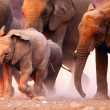 Elephants herd running — Stock Photo
