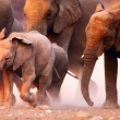 Elephants herd running — Stock Photo #3974644