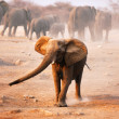 Elephant mock charging - 