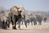 Elephant feet — Stock Photo