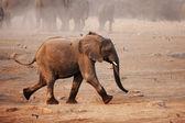 Elephant running — Stock Photo
