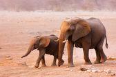 Sloní stádo — Stock fotografie