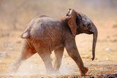 Baby elephant running — Foto de Stock