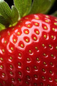 Fresh strawberry close-up — Stock fotografie