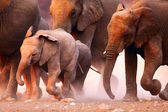 Elephants herd running — Stockfoto
