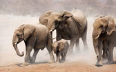Elephant herd — Stockfoto