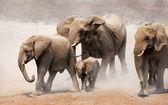 Olifanten kudde — Stockfoto
