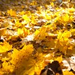 Autumn leaves — Stock Photo #4202507