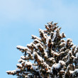 Winter snow covered fir trees - Stock Photo