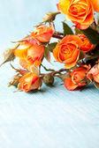 Orange roses — Stockfoto