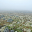 Fog & moss — Stock Photo