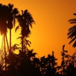 African sunset — Stock Photo