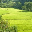 Rice terraces near Bamei Village (4) — Stock Photo