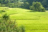 Rice terraces near Bamei Village (4) — Stock Photo