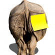 Rhino with Notice Sticker Tag Isolated — Stock Photo