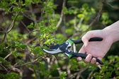 Trädgårdsarbetet trädgårdsskötsel — Stockfoto