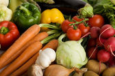 Vegetables Collection Group — Stock Photo