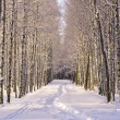 Path in snow in park — Stock Photo #4379456