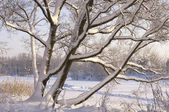 Snow-covered trees in the park — Stock Photo