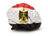 Egyptian flag on Human brain — Stock fotografie