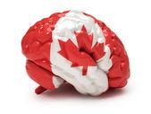 Canadian flag on Human brain — Stock fotografie