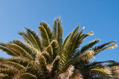 Palm in the sky — Stock Photo