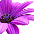 Stock Photo: Purple flower