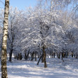 Stock Photo: Winter Tree Birch