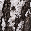 Foto de Stock  : Birch punishment as background