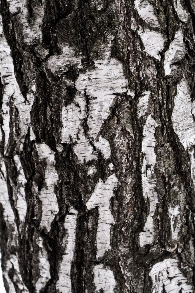 A birch punishment as background — Stock Photo #4119965