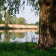 Tree at the river — Stock Photo #4126923