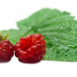 Stock Photo: Two raspberries and sheet
