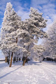 Frosty park — Stock Photo