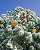 Nvogodnyaya fir-tree — Stock Photo