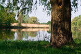 Tree at the river — Stock Photo