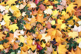 Fall leaves_3 — Stock Photo