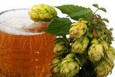 Pivo chmelem — Stock fotografie