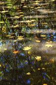 Stromy v jezeře — Stock fotografie