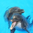 Two dolphin swimming in the pool — Stock Photo #5338163