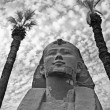 Small sphinx framed by two palm trees in black and white — Stock Photo