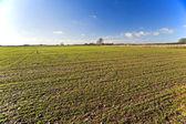 Landscape view of farmland — Stock Photo