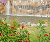 Water feature and bush in a landscaped garden — Stock Photo