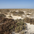 Vegetation on a desert island — Lizenzfreies Foto