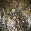 Stock Photo: Old damp walls