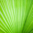 Abstract image of leaves — Foto de Stock