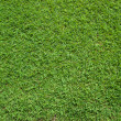 Top View of Green Grass — Stock Photo