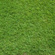 Foto Stock: Top View of Green Grass